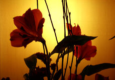 Sunset Bloom. Pretty flower blooms silhouetted against a low lit background Stock Photo