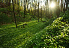 Sunset in the blossoming green forest in sunlight and shadows Stock Images