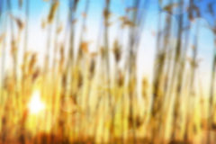 Sunset blurred background Stock Photos