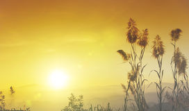 Free Sunset Blurs Silhouette  Yellow Sky And Wallpaper And Background Stock Images - 52201734