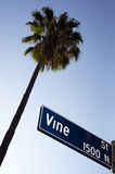 Palm Tree Vine Street Sign Hollywood California Royalty Free Stock Photo