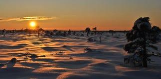 Sunset at the bog. Sunset in winter at the Marimetsa bog, Estonia stock images