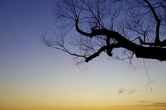 Sunset. The branch and the blue sky at the sunset of winter is Royalty Free Stock Images