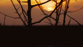 Sunset branch nature. Tree  apricot branch silhouette on orange sunset stock video footage
