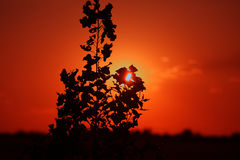 Sunset among branches Royalty Free Stock Image