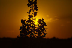 Sunset among branches Stock Photography