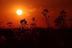 Sunset among branches Stock Images
