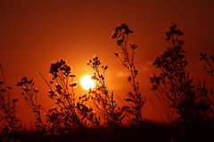Sunset among branches Royalty Free Stock Photo