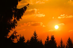 Sunset among branches Royalty Free Stock Photography