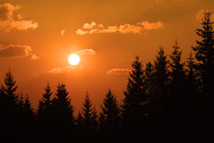 Sunset among branches Stock Image