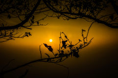 Sunset branches. Beautiful sunset through tree branches Stock Photos