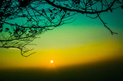 Sunset branches Royalty Free Stock Photography