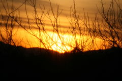 Sunset Through the Branches Royalty Free Stock Photos