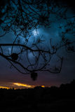 Sunset with branches Royalty Free Stock Images