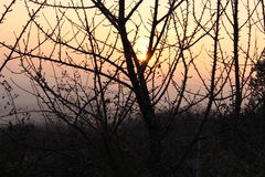 Sunset. Between the branches! the red sky Royalty Free Stock Photo