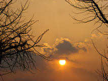 The sunset and branches shadows Royalty Free Stock Photography