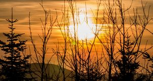 Sunset Branches Timelapse 4k stock video footage