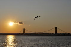 Sunset By The Bridge. Sunset By The Verrazano-Narrows Bridge Royalty Free Stock Photos