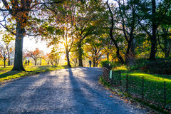 Sunset by at Bridle path in Central park Royalty Free Stock Images