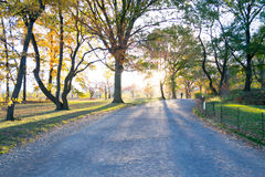 Sunset by at Bridle path in Central park Royalty Free Stock Photo