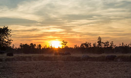 Sunset buffalo homing Stock Photo