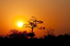 Sunset with bush and dead tree Royalty Free Stock Photography
