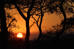 Sunset in the bush. Sunset in Kruger National Park, South Africa Stock Images