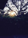 Sunset through bushes and trees. Shows rooftop and fence and foliage Stock Photos