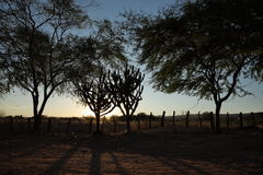 Sunset in the Caatinga of Brazil Stock Photo