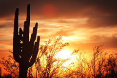 Sunset Cactus Stock Photography