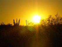 Sunset and cactus Royalty Free Stock Images