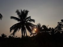 Sunset captured across the coconut trees. Sunset looks eye-catching when wached through the trees royalty free stock image