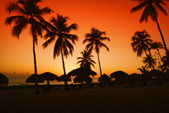 Sunset on caribbean beach with silhouette of palms Royalty Free Stock Photography