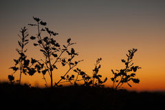 Sunset from Castiglione d'Orcia - Rocca d`Orcia, Royalty Free Stock Images