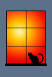 Sunset cat Royalty Free Stock Photos