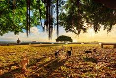 Sunset cats San Juan. Beautiful tree at sunset with a lot of cats in San Juan, Puerto Rico royalty free stock photo