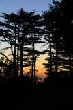 Sunset among Cedars, Lebanon Stock Image