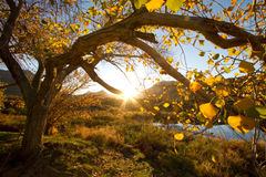Sunset in Cederberg. An autumn tree at sunset Stock Image