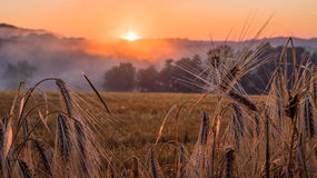 Sunset in the Champagne region. France Royalty Free Stock Photo