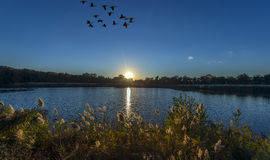 Sunset on a Chesapeake Bay pond with Geese flying Royalty Free Stock Image