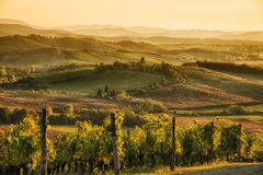 Sunset in Chianti. A panoramic view over the hills of Chianti at sunset hour royalty free stock image