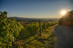 Sunset in Chianti. Panoramic view of scenic Tuscany landscape with vineyard in the Chianti region, Tuscany, Italy stock image