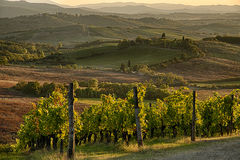 Sunset in Chianti. Panoramic view of scenic Tuscany landscape with vineyard in the Chianti region, Tuscany, Italy stock images