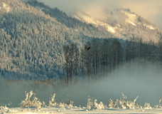 The Sunset Chilkat Valley under a covering of snow Royalty Free Stock Photography
