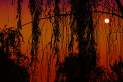 Sunset in China. Backlit of a willow, chinese sun is behind stock images