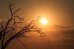 Sunset - Chobe N.P. Botswana, Africa Royalty Free Stock Images