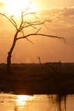 Sunset - Chobe N.P. Botswana, Africa Stock Photos