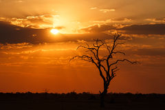 Sunset - Chobe N.P. Botswana, Africa. Sunset Over The Chobe National Park, Botswana, Africa Stock Photo