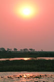 Sunset at Chobe riverfront from a boat Stock Images