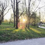 Sunset in a city park. Spring sunset between trees in a park Royalty Free Stock Photo
